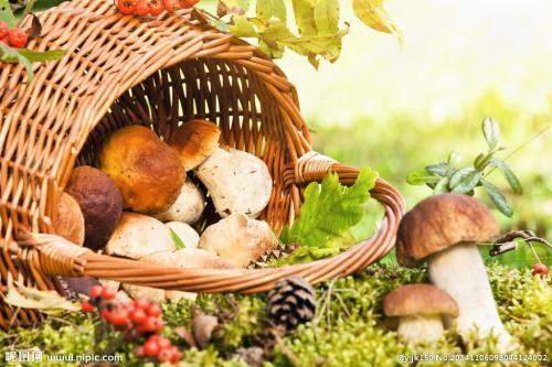 如何用德赢备用网址种植蘑菇
