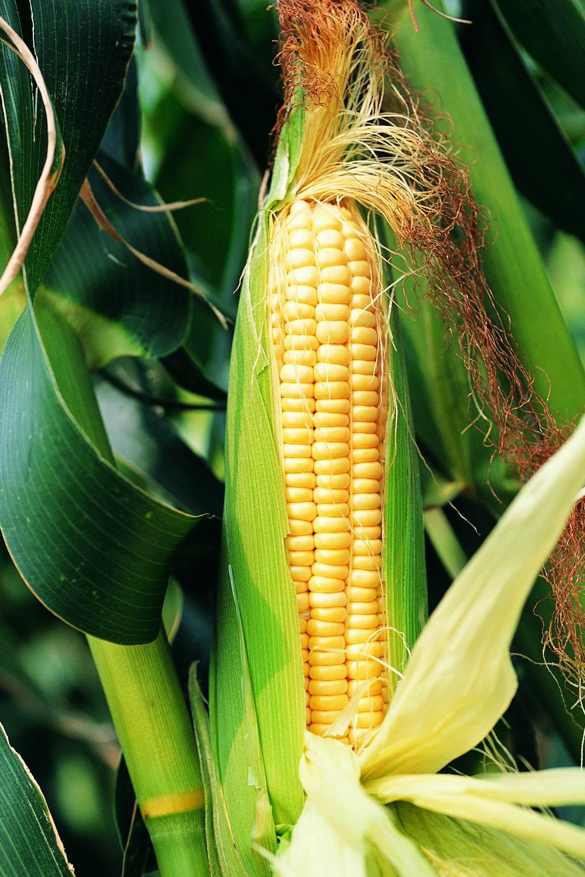 德国之声:粮食价格上涨恐引发全球动荡